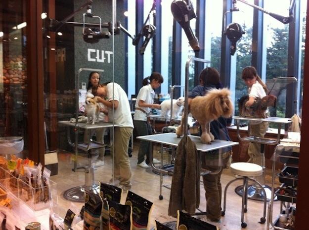 宠物店店铺装修之宠物美容区 国外图片分享