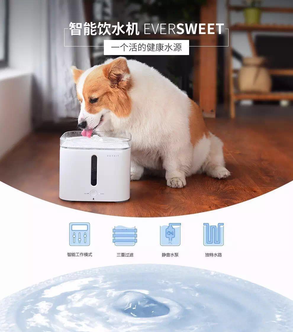 手绘狗狗饮水图片大全
