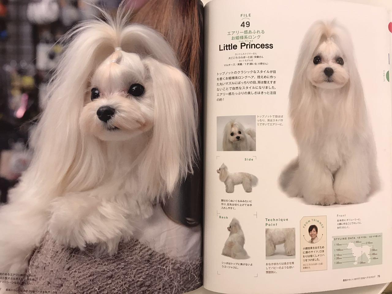 收藏!日本最卡哇伊狗狗造型大全