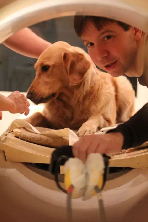 狗能听懂人说话吗?图片