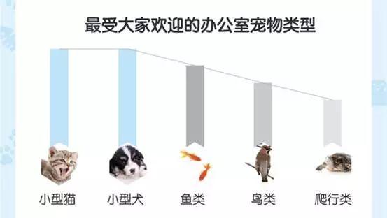 最受大家欢迎的分别为小型猫和小型犬,鱼类,鸟类,爬行类动物紧随其后.