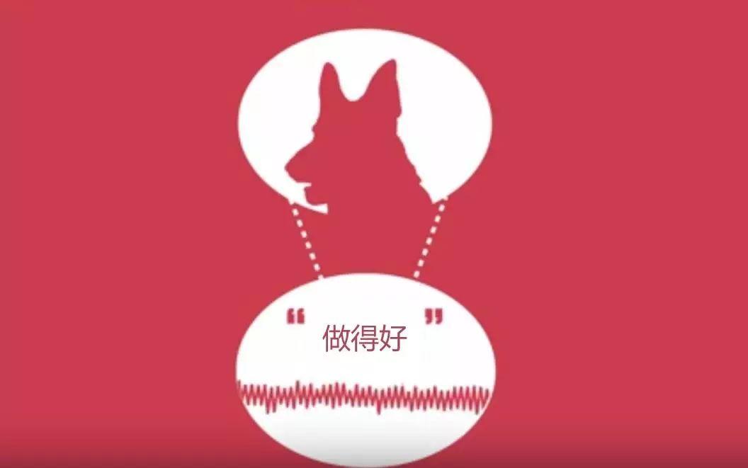 狗能听懂人说话吗?